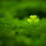 Absolut Green